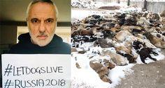 Mondiali 2018: è strage di randagi in Russia   Vegolosi   Bloglovin'