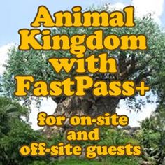 How to tour Animal Kingdom with FastPass+ (for on site and off site guests) from @Shannon, WDW Prep School