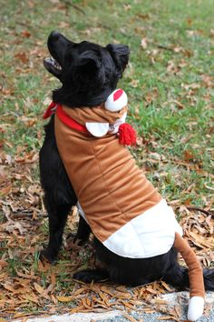 Office dog Max thinks he looks very handsome in his @PetSmart Sock Monkey costume!