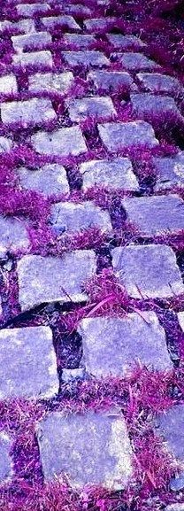 purple street   Very cool photo blog