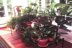 Meadow Muffin Gardens: Living Air Purification Systems - Houseplants