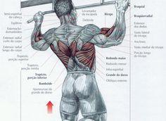 Exercícios para as costas - dorsais - parte 1