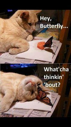 .Hey butterfly...