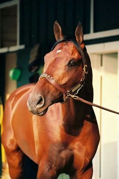 Kentucky Derby winner, Real Quiet. Pedigree Fappiano out of Dr. Fager mare Demure, I galloped her for Tartan farms