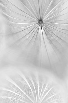 Jellyfish by Prem Balson, soft and airy flower photography