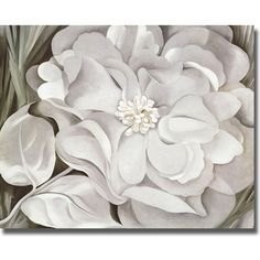 Georgia O'Keeffe 'The White Calico Flower' Canvas Art - Overstock Shopping - Top Rated Canvas