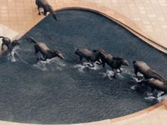 The Mustangs of Las Colinas, Williams Square, Irving, Texas - is one of the largest equestrian sculptures in the world set in a stark, pink granite plaza.