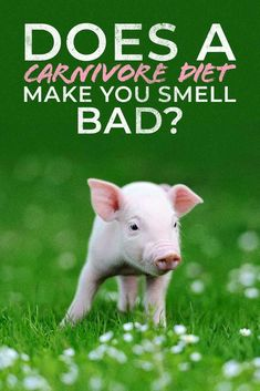 Some crazy articles have come out in the past saying a ketogenic diet can make you smell bad.  People have even attached this idea to the carnivore diet.  Is it true?  Well, not so much and we show you why.  Click bait comes into the equation as well but you'll see it's a rather funny topic. #carnivorediet #diet #keto #ketosis #smell #odor #carbs #lowcarbs #highfat Zero Carb Diet, No Carb Diets, Keto Breath, Bad Body Odor, Funny Topics, Meat Diet, Ketone Bodies, Food Portions, Diet Books