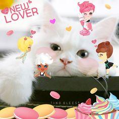 루비와 팅글리 Ruby & TingGlees✨ . #tingglees #tingglee #ruby #sweets #sweet #cute #fairy #cupcake #macaroons #stickers #stemp #cat #catstagram #팅글리 #루비 #컵케이크 #마카롱  #스티커 #고양이 #페르시안 #고양이스타그램