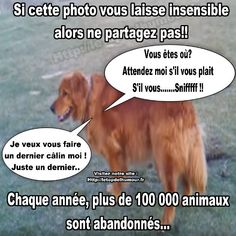 Plus de 1000 000 abandons chaque année. Funny Animals, Cute Animals, Never Again, Stop Animal Cruelty, Bad Mood, Abandoned, Dog Cat, Sad, Messages