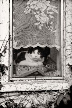 animal in window photography - Google Search