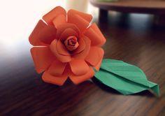 Orange rose••••• <3 <3