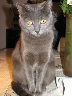 http://ataleofbeauty.wordpress.com/2014/11/19/my-wonderful-cats-%E2%80%BF%E2%80%BF/