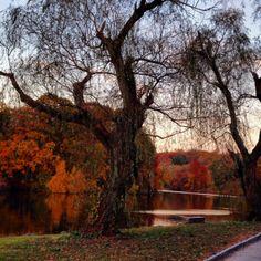 Van Cortlandt Park- Bronx, NY Fall 2013