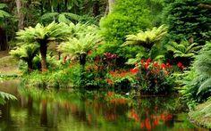 тропический лес: 21 тыс изображений найдено в Яндекс.Картинках