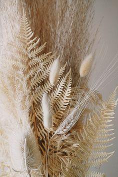 Cream Aesthetic, Plant Aesthetic, Simple Aesthetic, Flower Phone Wallpaper, Lock Screen Wallpaper, Dried Flower Arrangements, Dried Flowers, Beige Wallpaper, Wallpaper Backgrounds