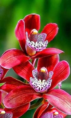 orchid Do you know the meaning associated with orchids?Do you know the meaning associated with orchids? Unusual Flowers, Rare Flowers, Types Of Flowers, Flowers Nature, Tropical Flowers, Amazing Flowers, Beautiful Flowers, Orchid Plants, Exotic Plants