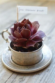 heiterkram: heitere Tassen-Pflanze Home Deco, Succulents, Make It Yourself, Plants, How To Make, Handmade, Gifts, Diy, Decor