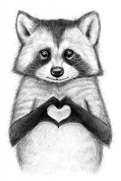 Raccoon with heart Poster Raccoon Paws, Cute Raccoon, Racoon, Raccoon Drawing, Heart Poster, Oeuvre D'art, Animal Drawings, Illustration Art, Raccoon Illustration