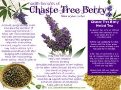 "REMEMBER! SHARE, LIKE & COMMENT to keep seeing my Posts!  If you plan to change your lifestyle in 2014, read here!   http://Piamaya.SkinnyBodyCare.com  Chaste Tree Berry or Vitex agnus-castus, sometimes called ""the woman's herb"", is native to central Asia and the region bordering the Mediterranean Sea. It has been used for over 2000 years to help alleviate women's health concerns such as infertility, menstrual irregularities and other gynecological concerns. Men also use vitex Chaste Tree…"