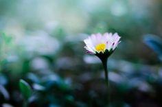 Flower of november ... by Maxime Dugenet