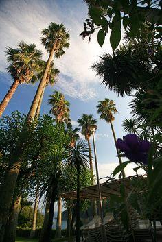 Shimoda Palms #japan #shizuoka
