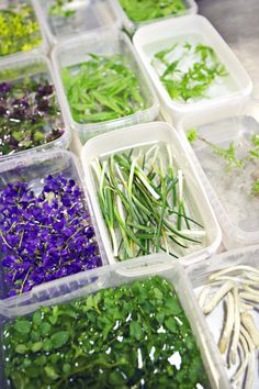 fresh and colorful herbs and vegetables