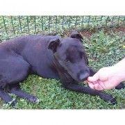 Adozione cani - Nerone è un cane particolare, è molto affettuoso ed ha bisogno di contatto umano