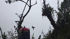 Tanz der Kolibris