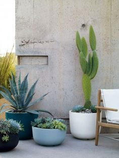 planters with cacti