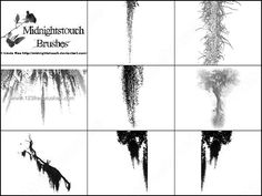 Spanish Moss Brushes Free - Download  Photoshop brush http://www.123freebrushes.com/grunge-brush-27/ , Published in #GrungeSplatter. More Free Grunge & Splatter Brushes, http://www.123freebrushes.com/free-brushes/grunge-splatter/ | #123freebrushes