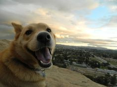 This pupper is just so happy to be here right now with his favourite person. | 17 Dogs That Are Stoked To See You