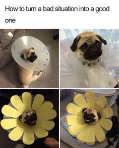 40 Funny And Cute Dog Memes That Will Cure Your Soul #funny #picture