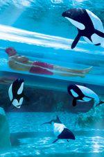Aquatica- Orlando (Sea World Waterpark)