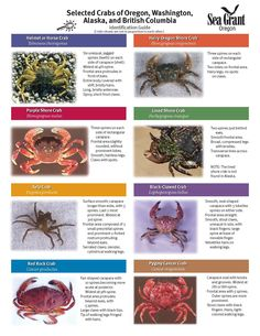 Selected crabs of Oregon, Washington, Alaska, and British Columbia : identification guide, by the
