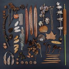 Art photography by Emily Blincoe ~ nature collection! I still have my childhood collection boxes. This makes me want to arrange the contents behind glass so I can see all the cool stuff I picked up and kept! Deco Boheme, Nature Collection, Nature Table, Blog Deco, Seed Pods, Nature Crafts, Natural Forms, Back To Nature, Botanical Illustration