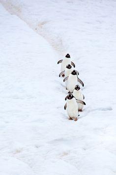 Penguin Photograph
