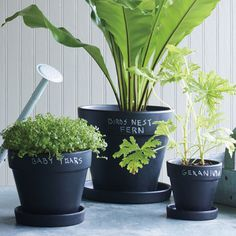 Chalkboard planters! An easy and stylish way to label your plants!