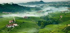 Discovering Valdobbiadene, the little town symbol of the wine Prosecco, through the vineyards and ancient villages that are in the proximity.
