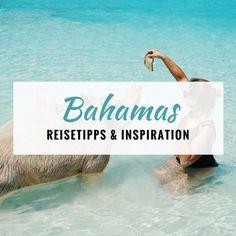 Alles was du für deinen Bahamas Urlaub wissen musst: Schwimmende Schweine, Exuma, Nassau