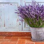 Gartenzauber   Leidenschaft für Lavendel - Gartenzauber