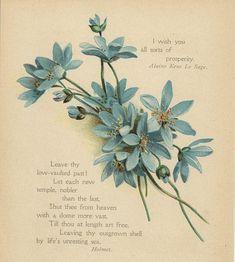 ANTIQUE BLUE FLOWERS ANEMONE HEPATICA BOTANICAL COLOR POETRY ART CHROMO PRINT
