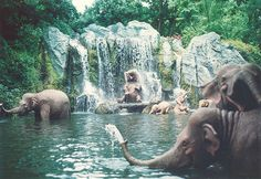 trip to africa - elephants bathing