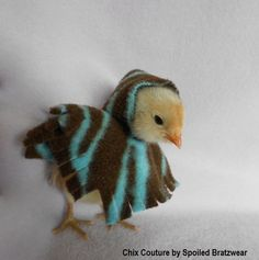 chicken clothes | ,Pets-zebra,chicken,Pets,Clothing,Costume,peep poncho,chicken clothes ...
