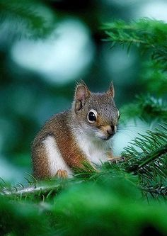 Little Squirrel Sitting on a Tree Branch.