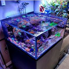 """4,221 Likes, 13 Comments - Aquarium Hobby (@aquariumhobby) on Instagram: """"The view of this aquarium is Mind Blowing! ----Photo from @iburnttoast #aquarium #fishtank…"""""""