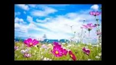 One Hours of Relaxation Music with Sounds of Water  #RelaxationMusic   #MeditationMusic