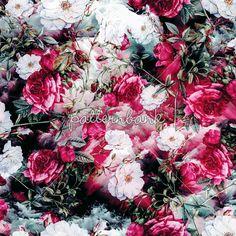 Vintage Roses on Grunge Background