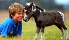 Mini pony 2