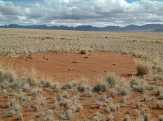 Another study, this one published online June 27, 2012 in the journal PLOS ONE, suggested the small circles stick around for about 24 years, while the larger ones stay put as long as 75 years. Here, a typical fairy circle in Namibia. .